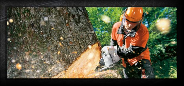 STIHL equipment cutting down a tree